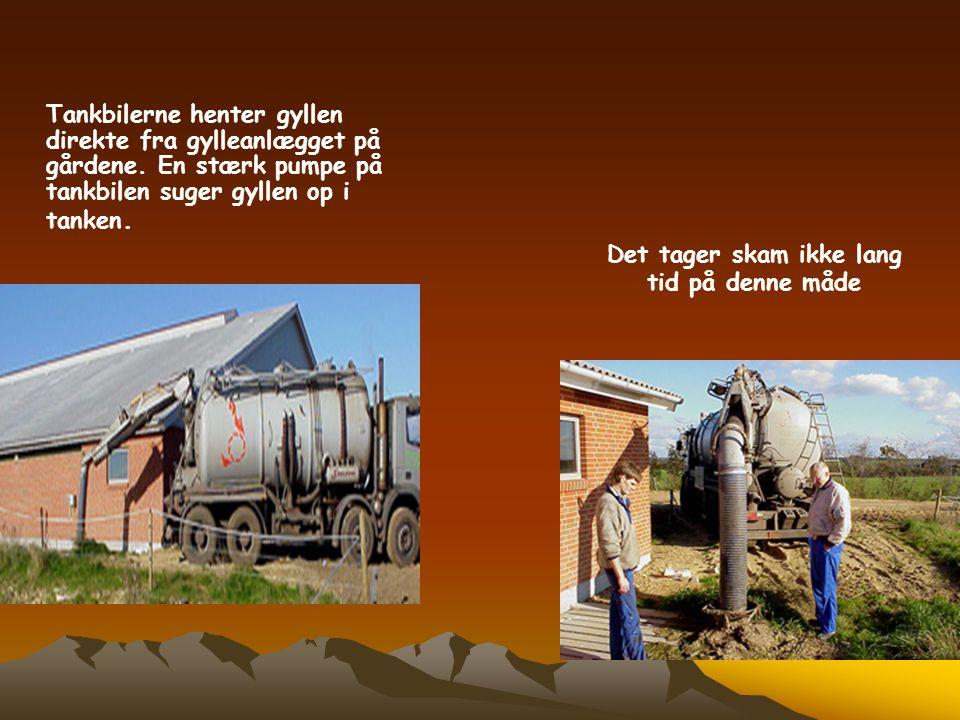 Det tager skam ikke lang tid på denne måde Tankbilerne henter gyllen direkte fra gylleanlægget på gårdene. En stærk pumpe på tankbilen suger gyllen op
