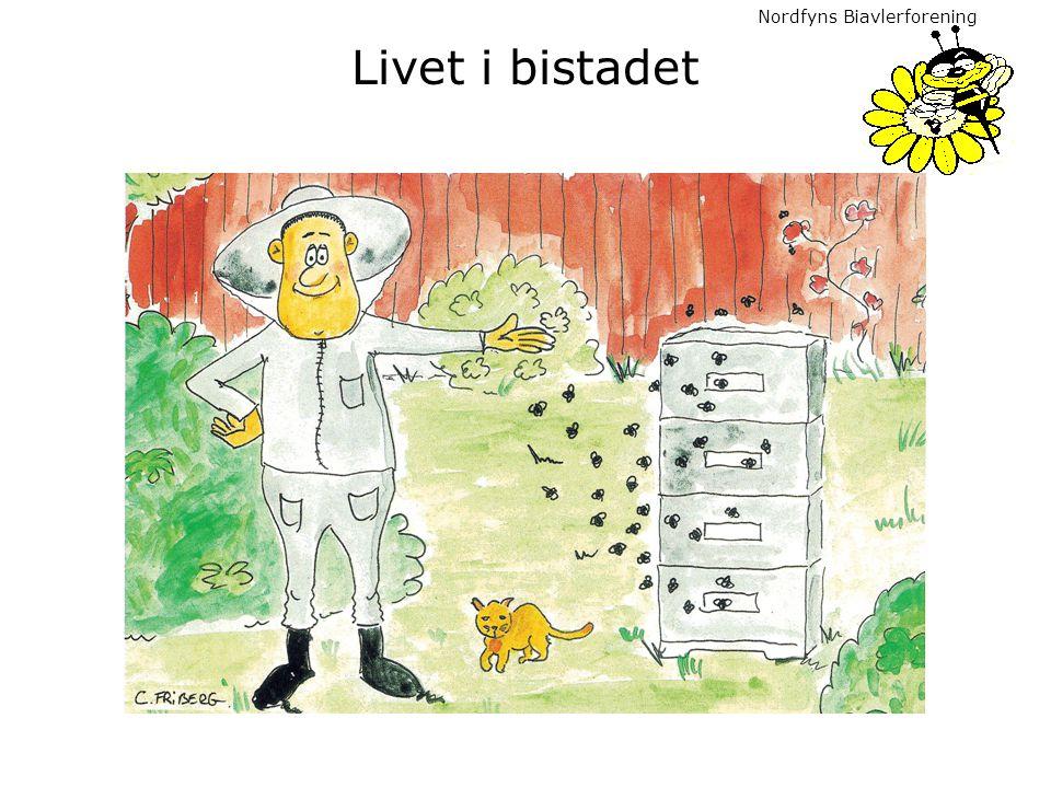 Nordfyns Biavlerforening Livet i bistadet