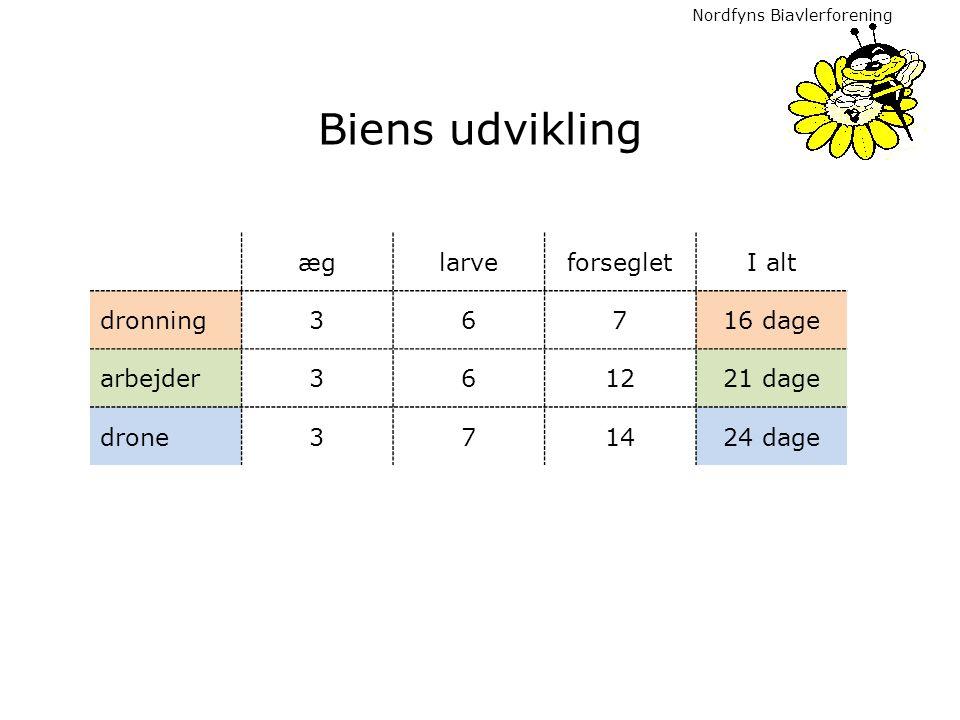 Nordfyns Biavlerforening Biens udvikling æglarveforsegletI alt dronning36716 dage arbejder361221 dage drone371424 dage