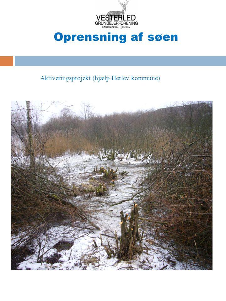 Oprensning af søen Aktiveringsprojekt (hjælp Herlev kommune)