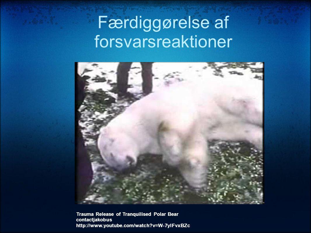 Færdiggørelse af forsvarsreaktioner Trauma Release of Tranquilised Polar Bear contactjakobus http://www.youtube.com/watch?v=W-7ylFvxBZc