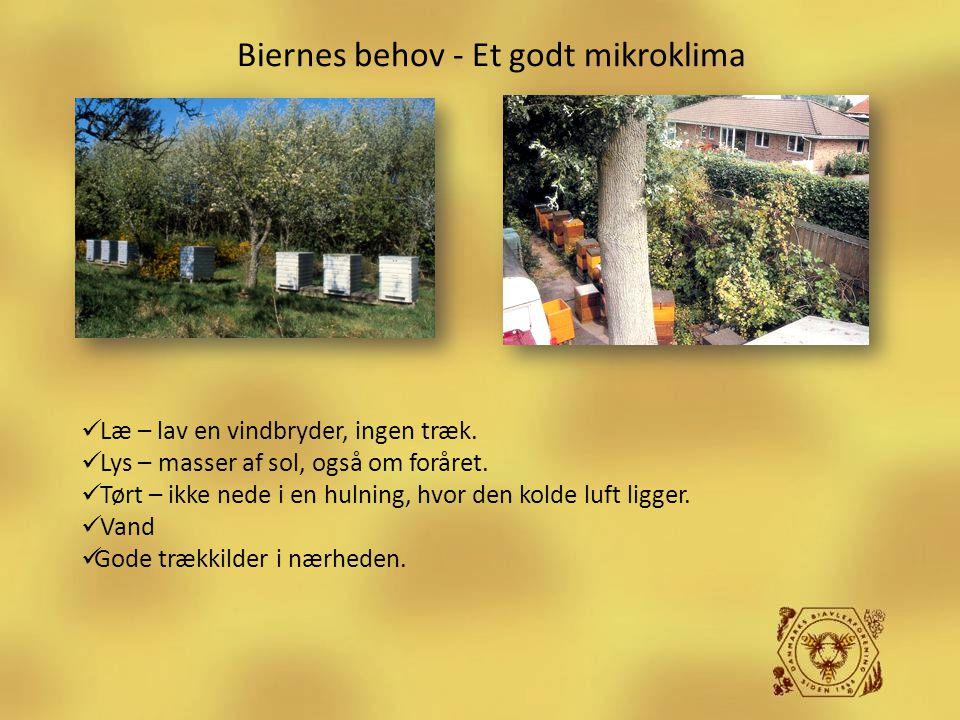 Biernes behov - Et godt mikroklima  Læ – lav en vindbryder, ingen træk.  Lys – masser af sol, også om foråret.  Tørt – ikke nede i en hulning, hvor