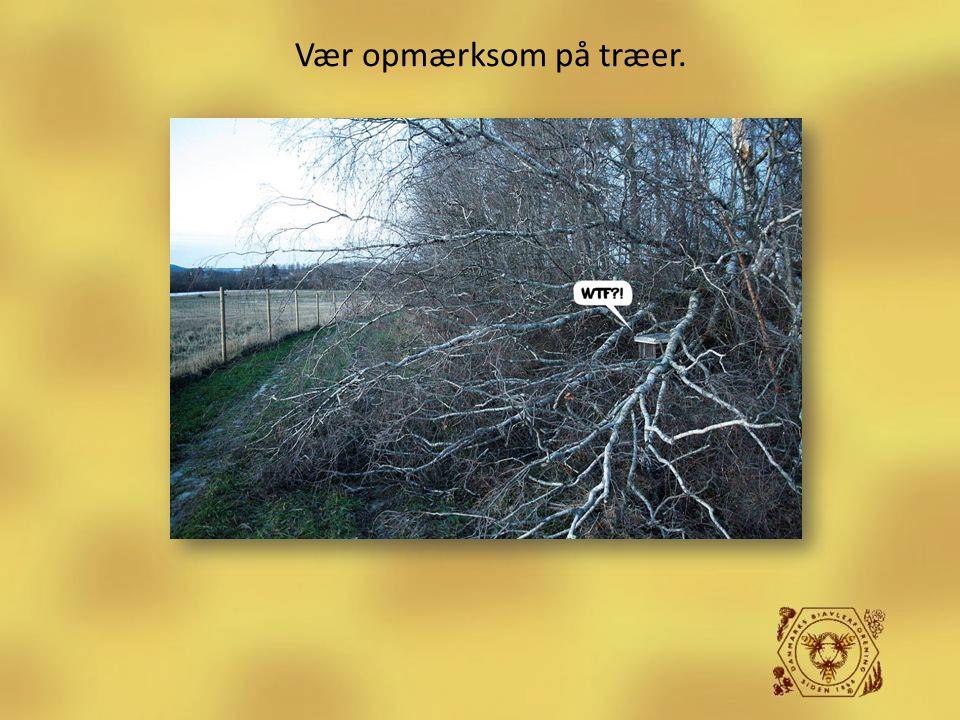 Vær opmærksom på træer.