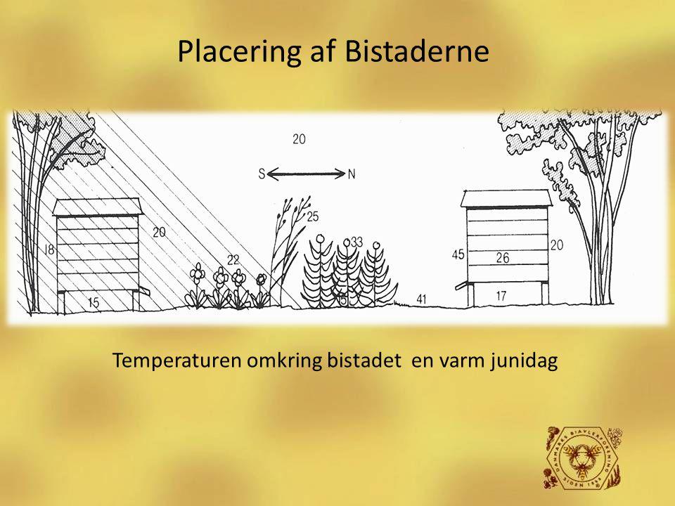Placering af Bistaderne Temperaturen omkring bistadet en varm junidag