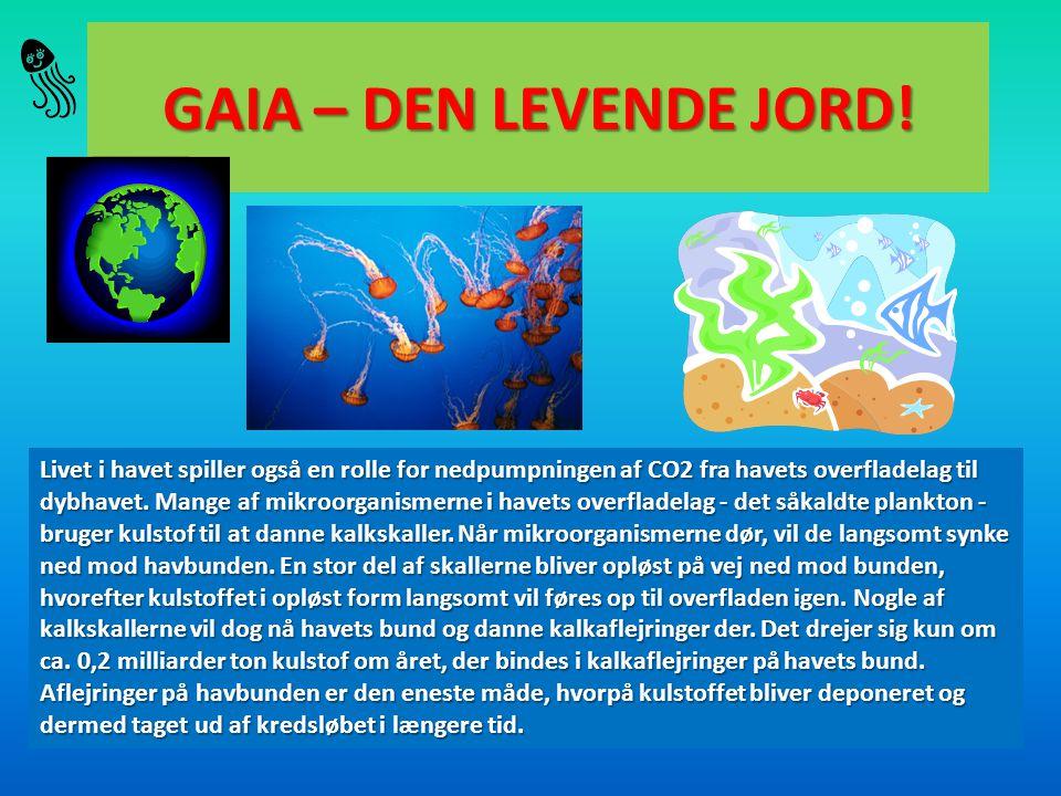 GAIA – DEN LEVENDE JORD! Livet i havet spiller også en rolle for nedpumpningen af CO2 fra havets overfladelag til dybhavet. Mange af mikroorganismerne