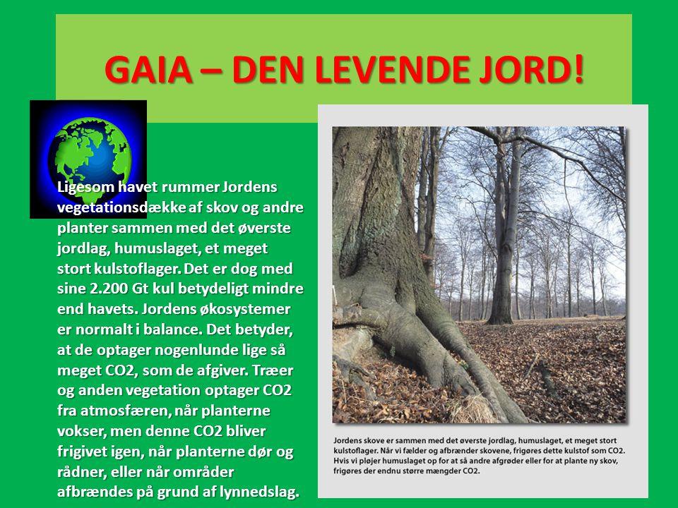 GAIA – DEN LEVENDE JORD! Ligesom havet rummer Jordens vegetationsdække af skov og andre planter sammen med det øverste jordlag, humuslaget, et meget s