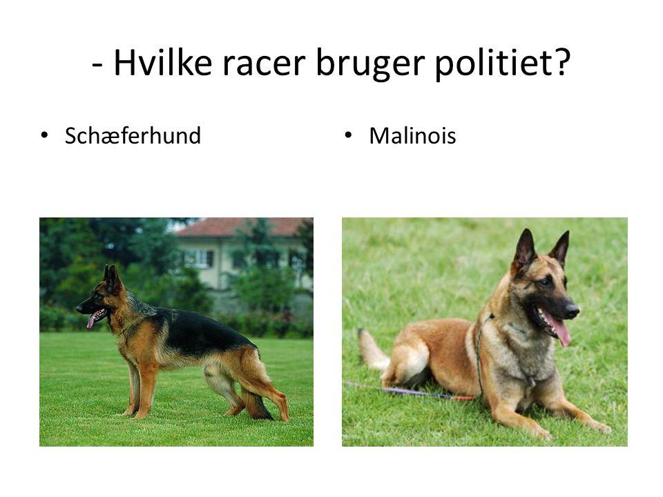 - Hvilke racer bruger politiet? • Schæferhund • Malinois