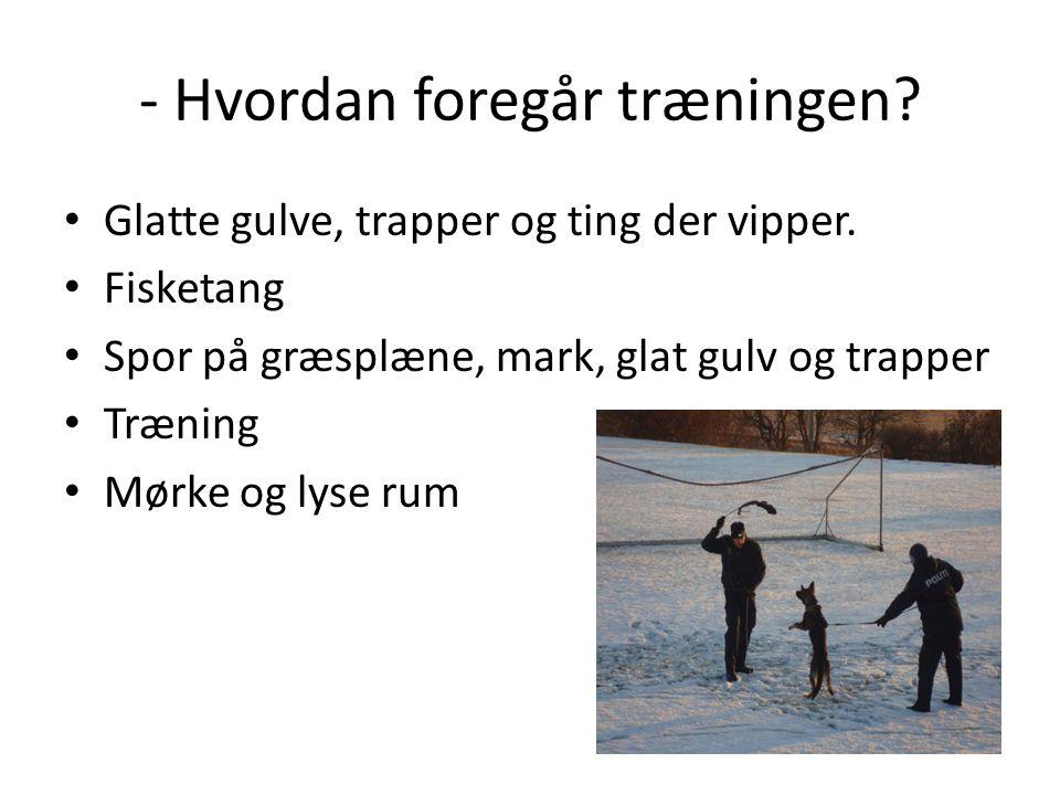Politi skolen i Farum • Militæret • Jørgen & Laust Militær, nedgravning genstand