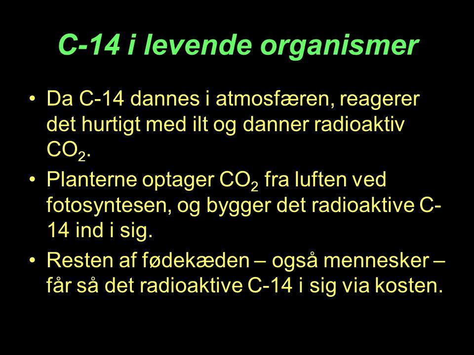 C-14 i levende organismer •Da C-14 dannes i atmosfæren, reagerer det hurtigt med ilt og danner radioaktiv CO 2. •Planterne optager CO 2 fra luften ved