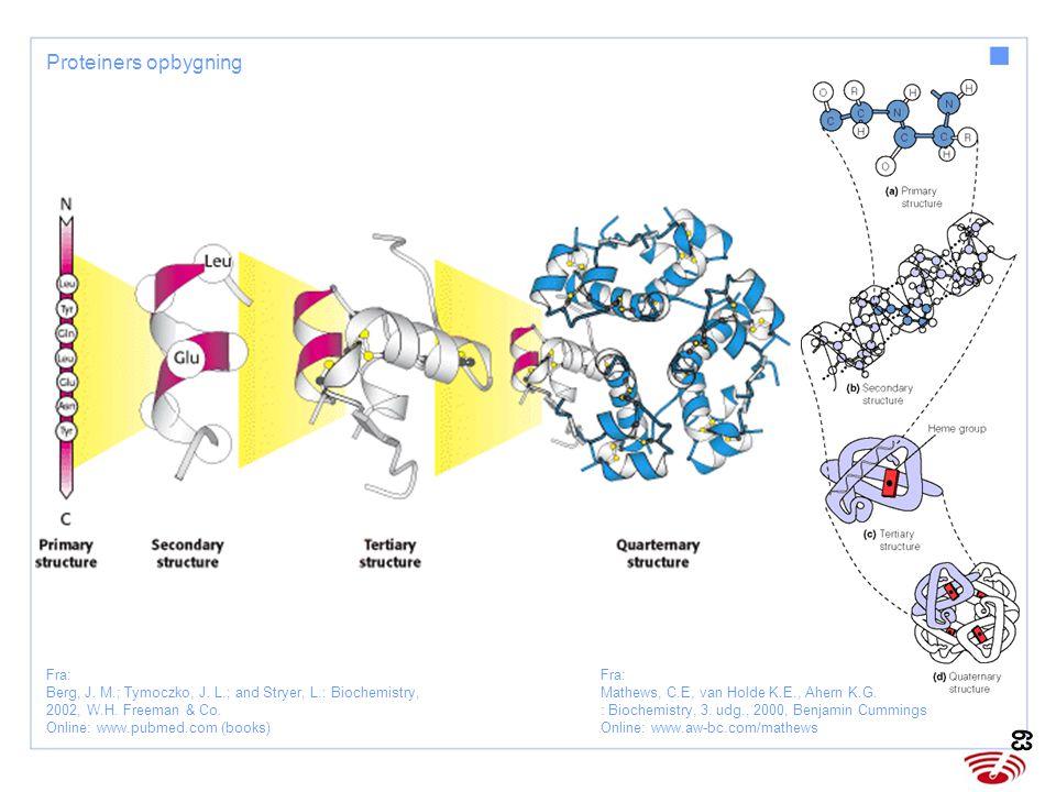 Fra Sand O, Sjaastad ØV, Haug E: Fysiologi – en grundbog, 2004; Munksgaard Fig 8.3 - Hæmoglobinmolekylet