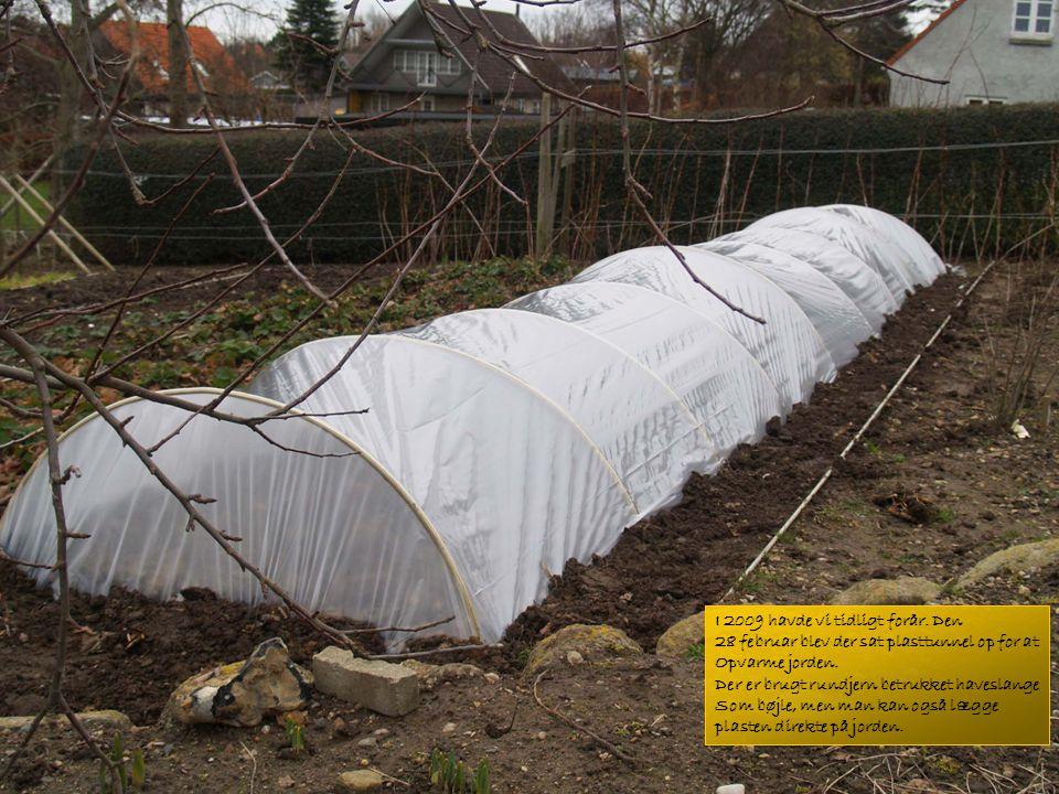 I 2009 havde vi tidligt forår.Den 28 februar blev der sat plasttunnel op for at Opvarme jorden.