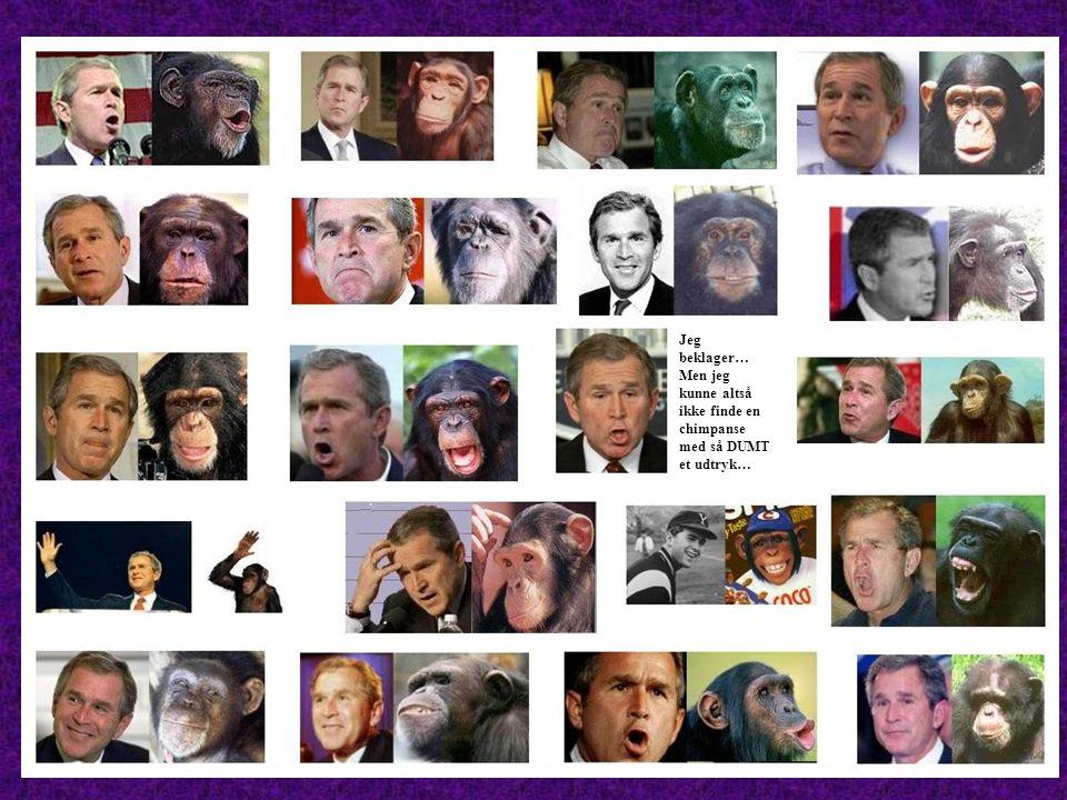 Jeg beklager… Men jeg kunne altså ikke finde en chimpanse med så DUMT et udtryk…