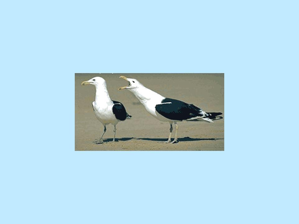 Jeg har altid troet, at det skulle afgøres kirurgisk, medens ornitologer talte om fjer, størrelse, næbbet og andre lige så idiotisk måder, som kræver timers observans af dem i deres naturlige omgivelser og så videre.