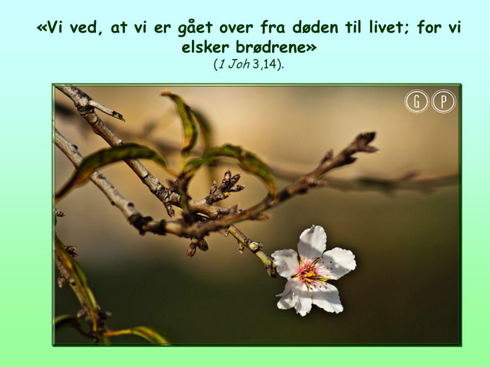 Livets Ord Februar 2013