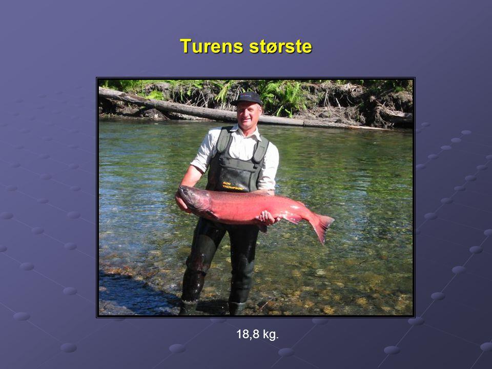 Turens største 18,8 kg.
