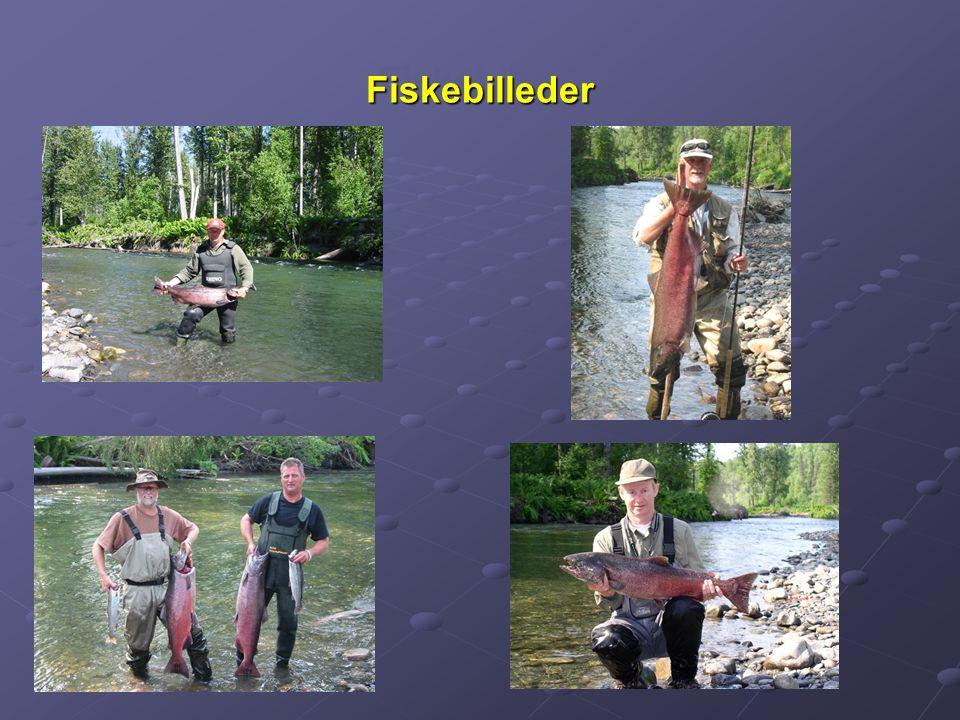 FiskebillederFiskebilleder