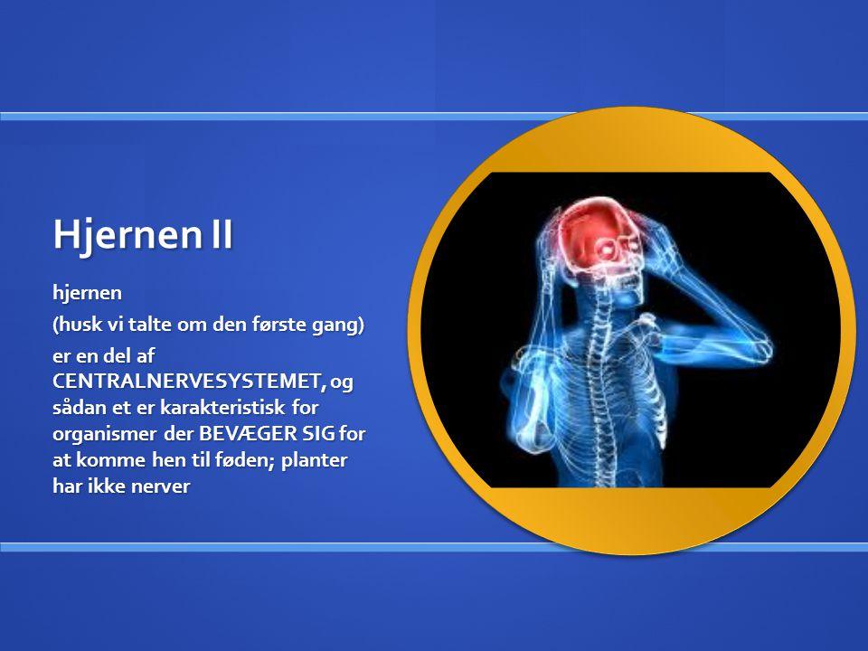 Hjernen II hjernen (husk vi talte om den første gang) er en del af CENTRALNERVESYSTEMET, og sådan et er karakteristisk for organismer der BEVÆGER SIG for at komme hen til føden; planter har ikke nerver