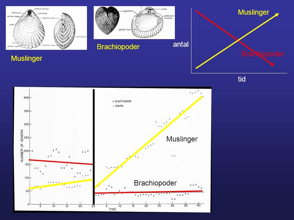 Brachiopoder Muslinger tid antal Muslinger Brachiopoder