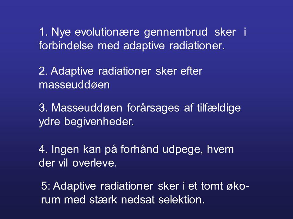 1. Nye evolutionære gennembrud sker i forbindelse med adaptive radiationer. 2. Adaptive radiationer sker efter masseuddøen 3. Masseuddøen forårsages a
