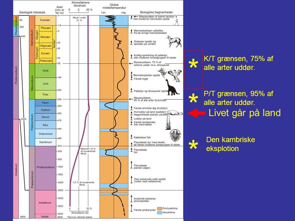 * * Livet går på land Den kambriske eksplotion K/T grænsen, 75% af alle arter uddør. P/T grænsen, 95% af alle arter uddør. *