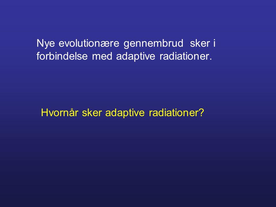 Nye evolutionære gennembrud sker i forbindelse med adaptive radiationer. Hvornår sker adaptive radiationer?