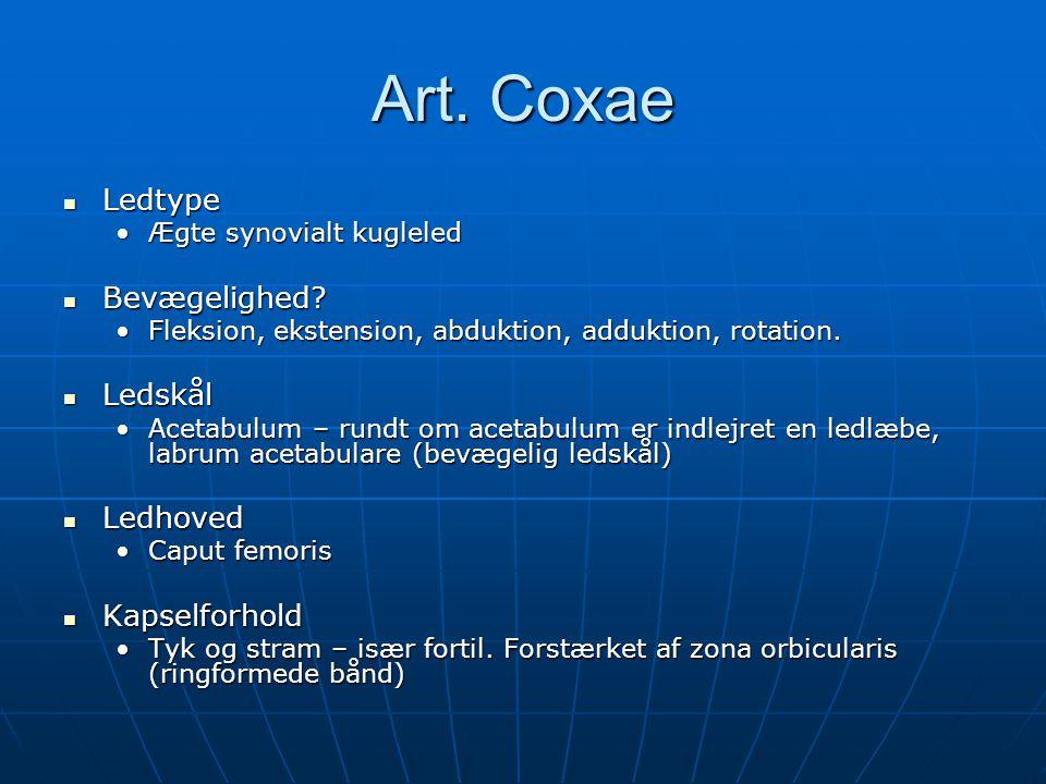 Art.Coxae  Ledtype •Ægte synovialt kugleled  Bevægelighed.