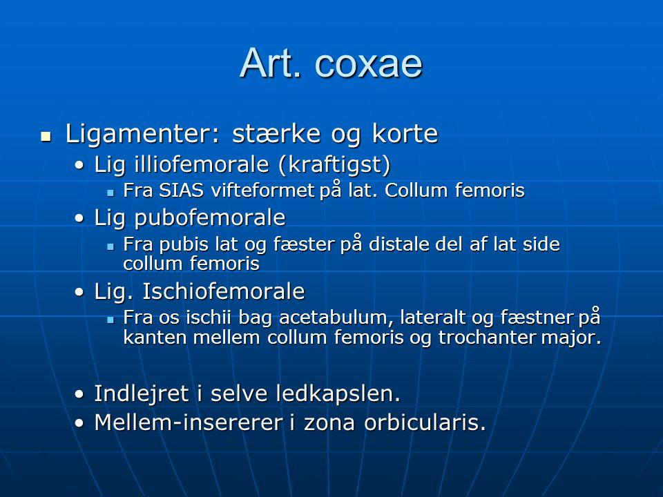 Art. coxae  Ligamenter: stærke og korte •Lig illiofemorale (kraftigst)  Fra SIAS vifteformet på lat. Collum femoris •Lig pubofemorale  Fra pubis la