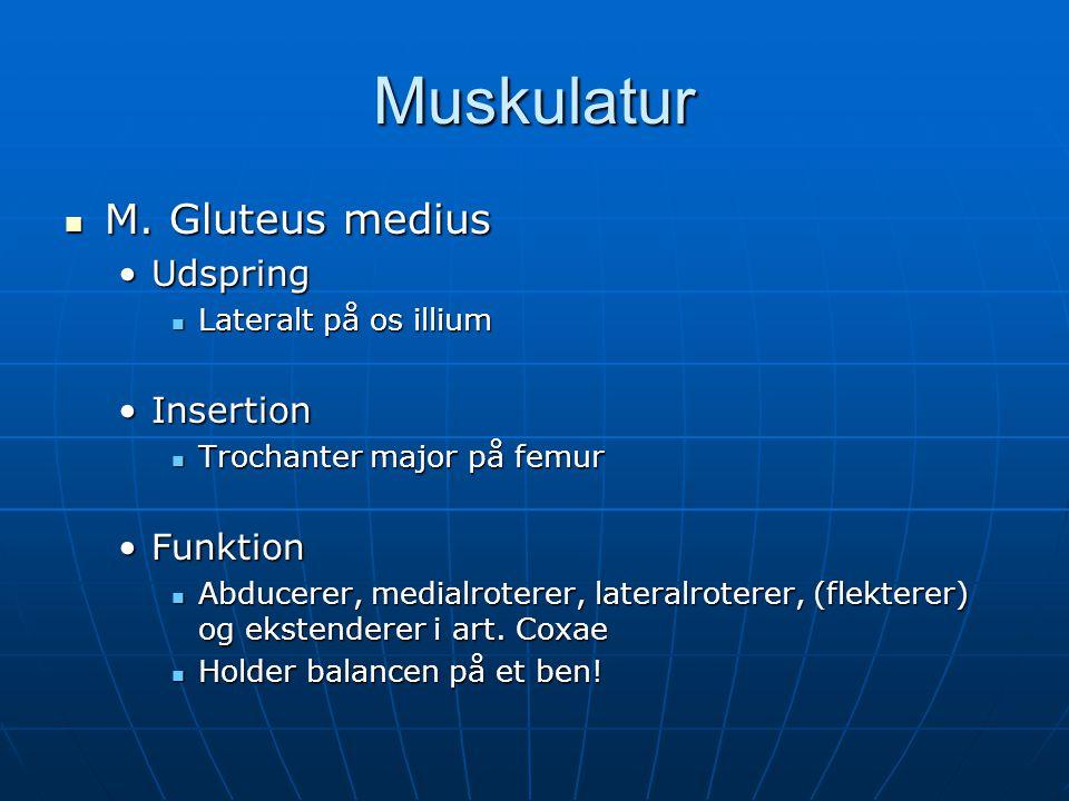 Muskulatur  M.