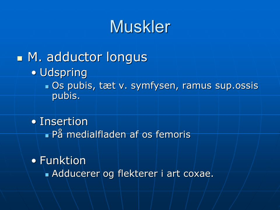 Muskler  M.adductor longus •Udspring  Os pubis, tæt v.