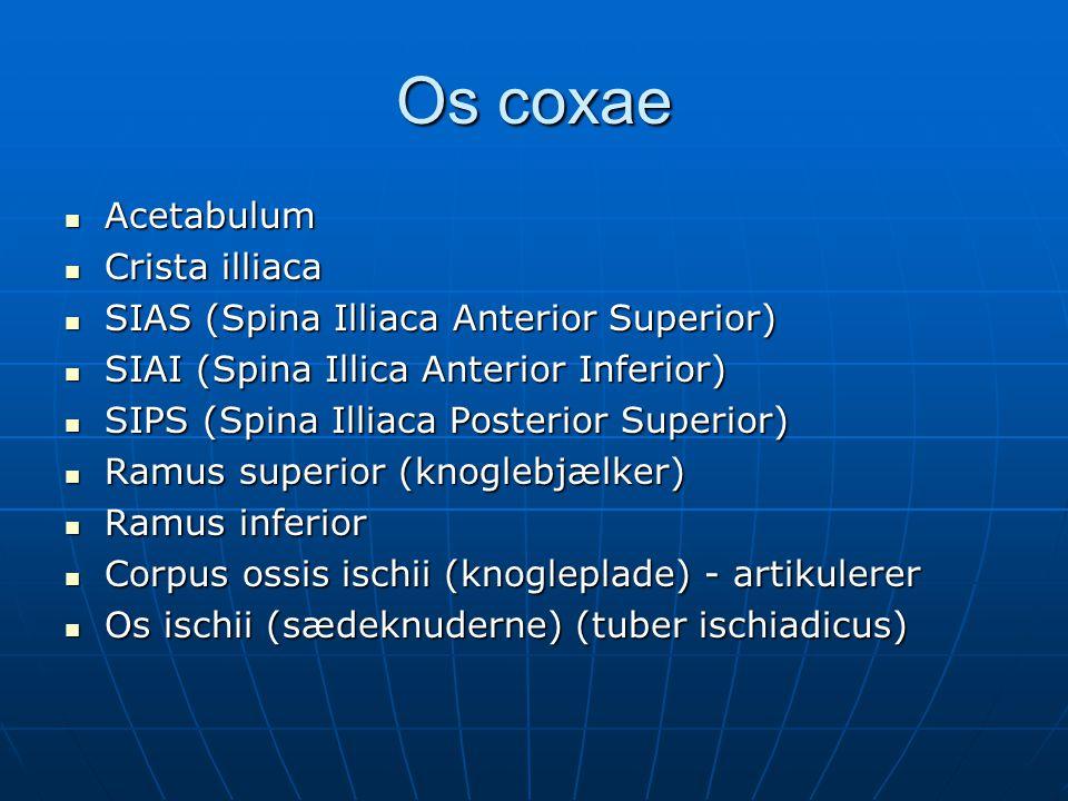 Os coxae  Acetabulum  Crista illiaca  SIAS (Spina Illiaca Anterior Superior)  SIAI (Spina Illica Anterior Inferior)  SIPS (Spina Illiaca Posterior Superior)  Ramus superior (knoglebjælker)  Ramus inferior  Corpus ossis ischii (knogleplade) - artikulerer  Os ischii (sædeknuderne) (tuber ischiadicus)