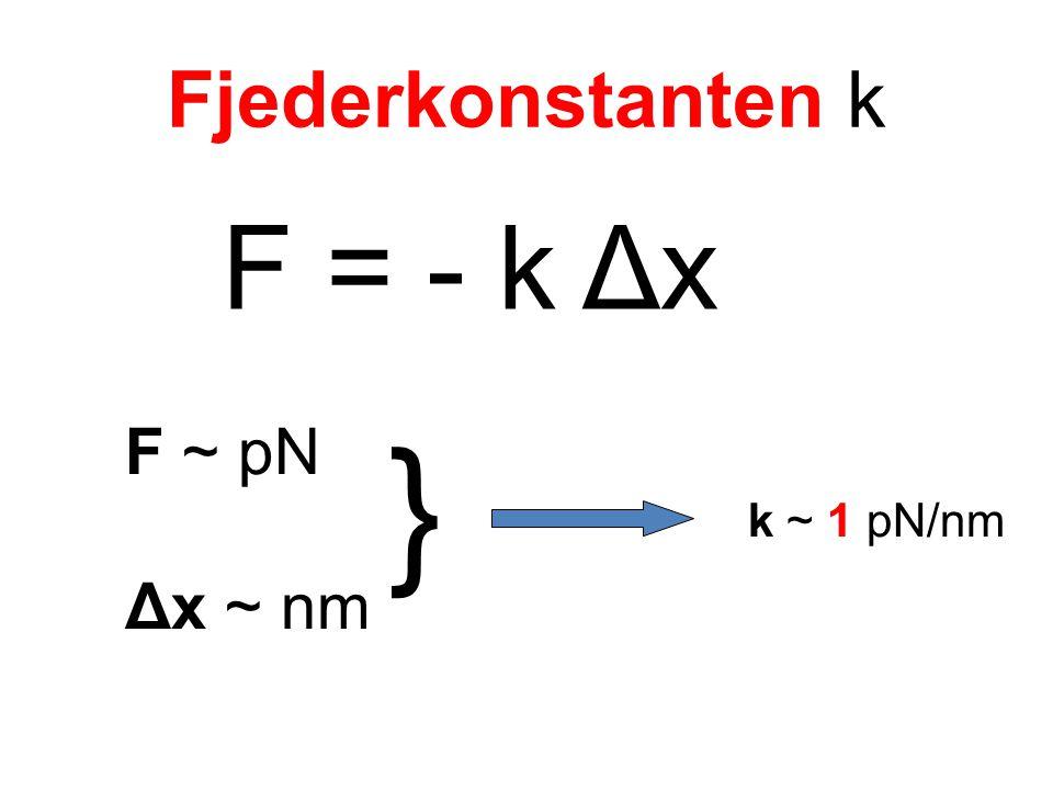 Fjederkonstanten k F = - k Δx F ~ pN Δx ~ nm k ~ 1 pN/nm }