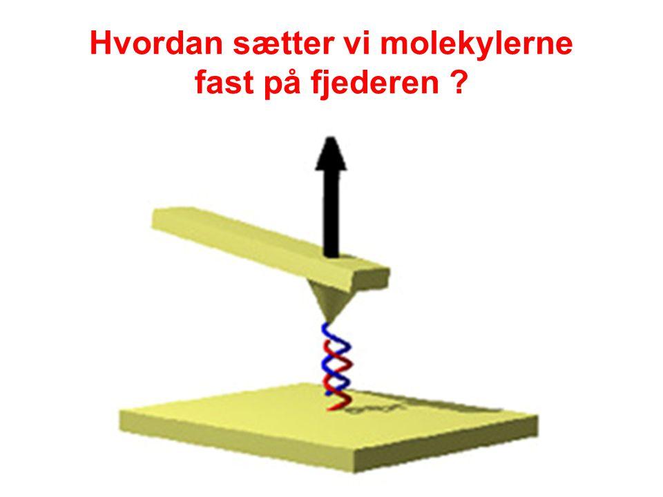Hvordan sætter vi molekylerne fast på fjederen