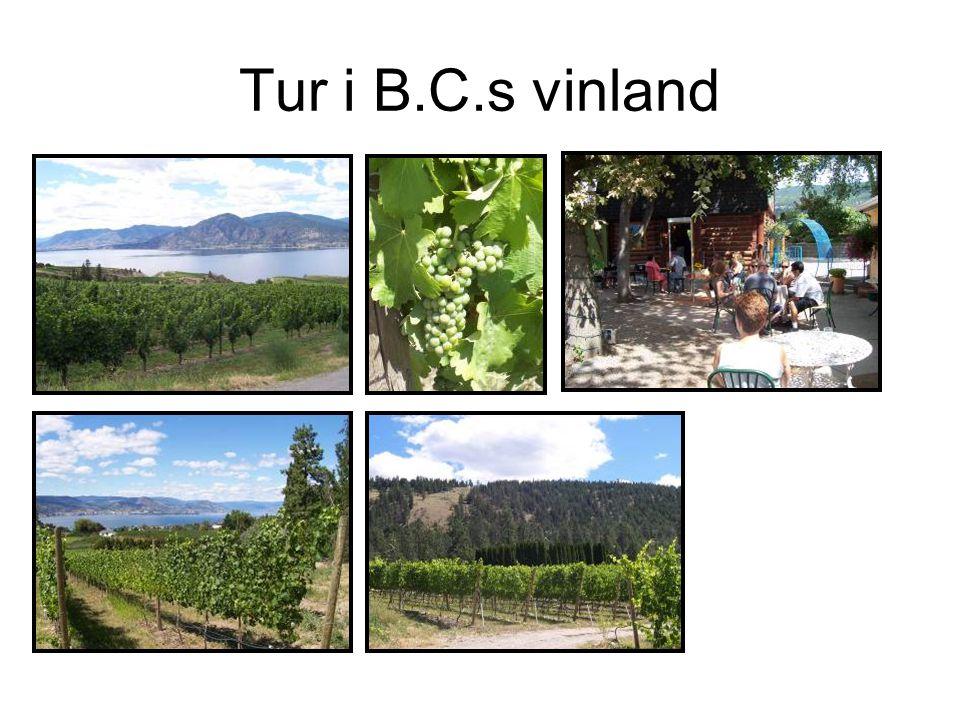 Tur i B.C.s vinland