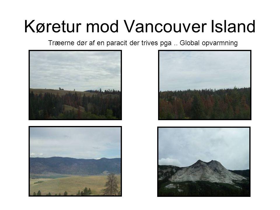 Køretur mod Vancouver Island Træerne dør af en paracit der trives pga.. Global opvarmning