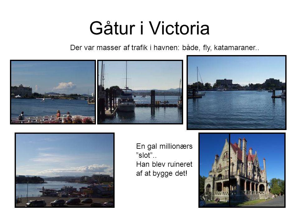Gåtur i Victoria Der var masser af trafik i havnen: både, fly, katamaraner..