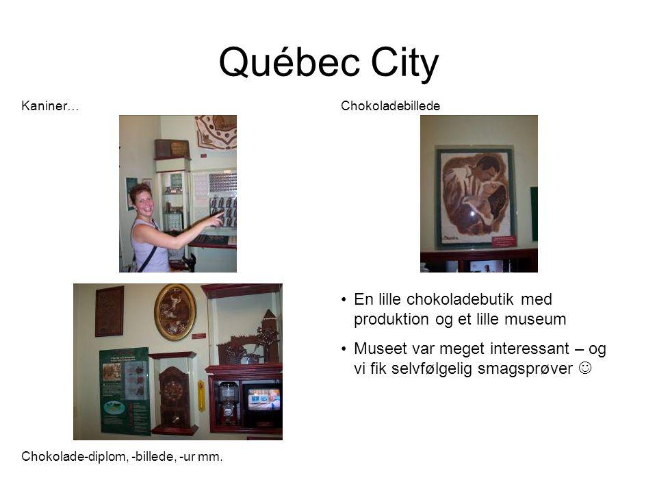 Québec City Kaniner… Chokoladebillede Chokolade-diplom, -billede, -ur mm.
