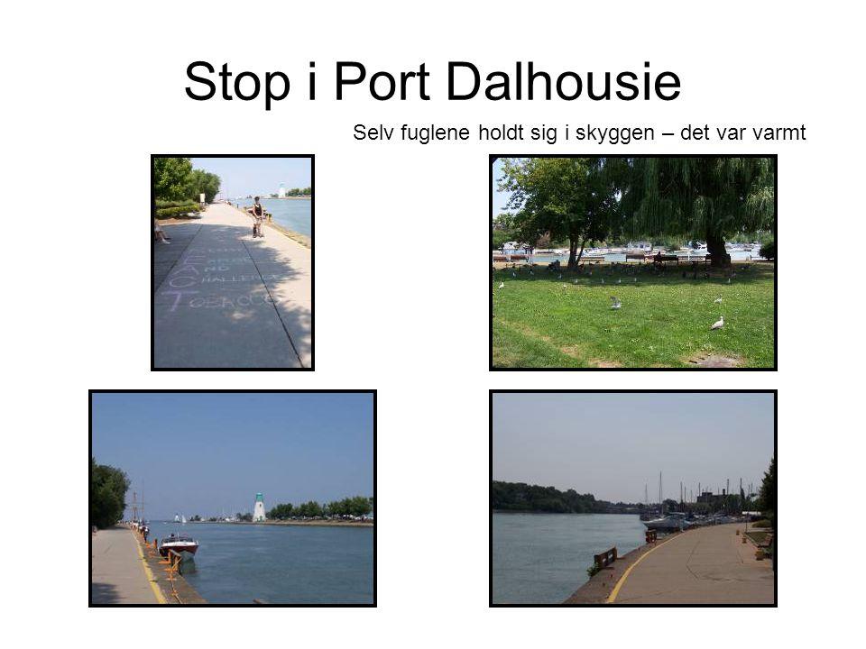Stop i Port Dalhousie Selv fuglene holdt sig i skyggen – det var varmt