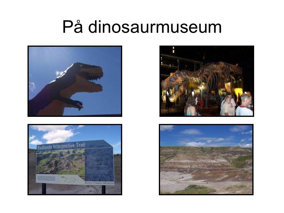 På dinosaurmuseum