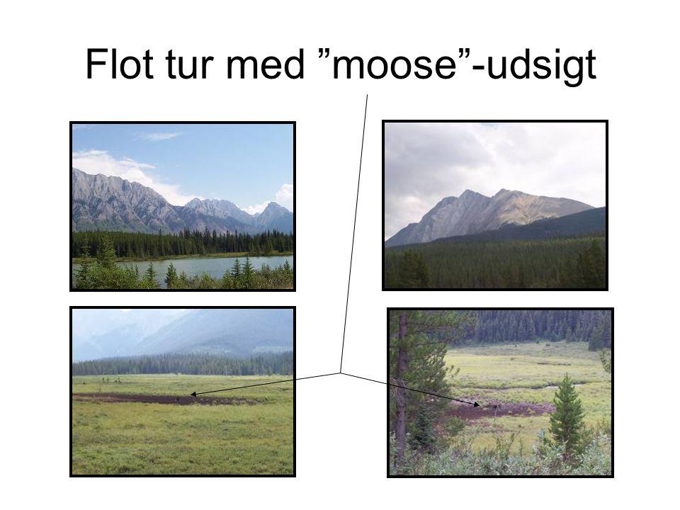 Flot tur med moose -udsigt