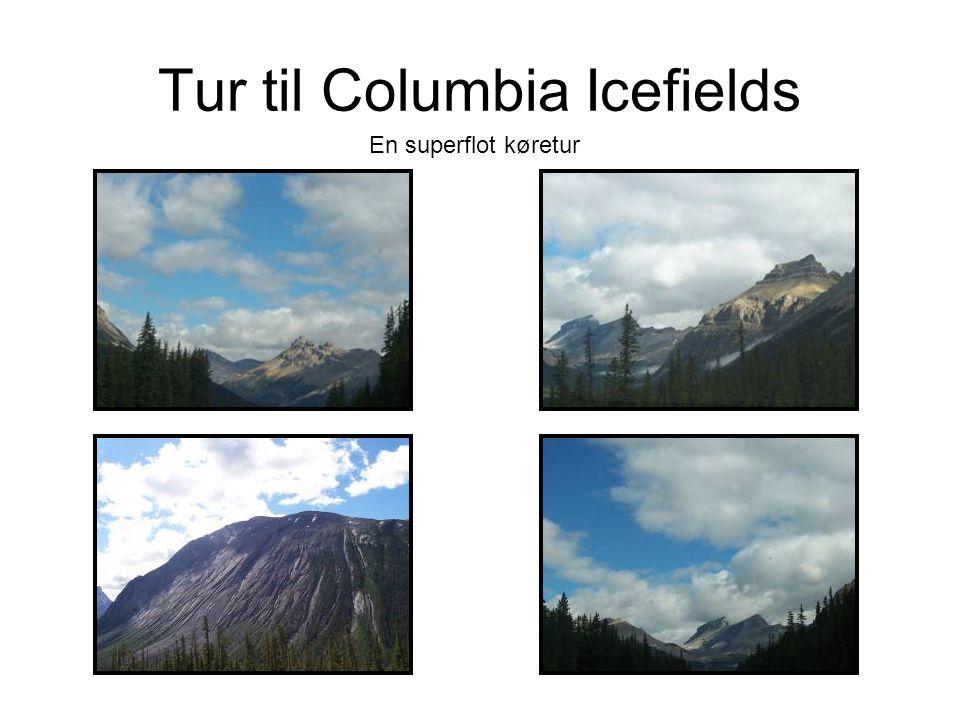 Tur til Columbia Icefields En superflot køretur
