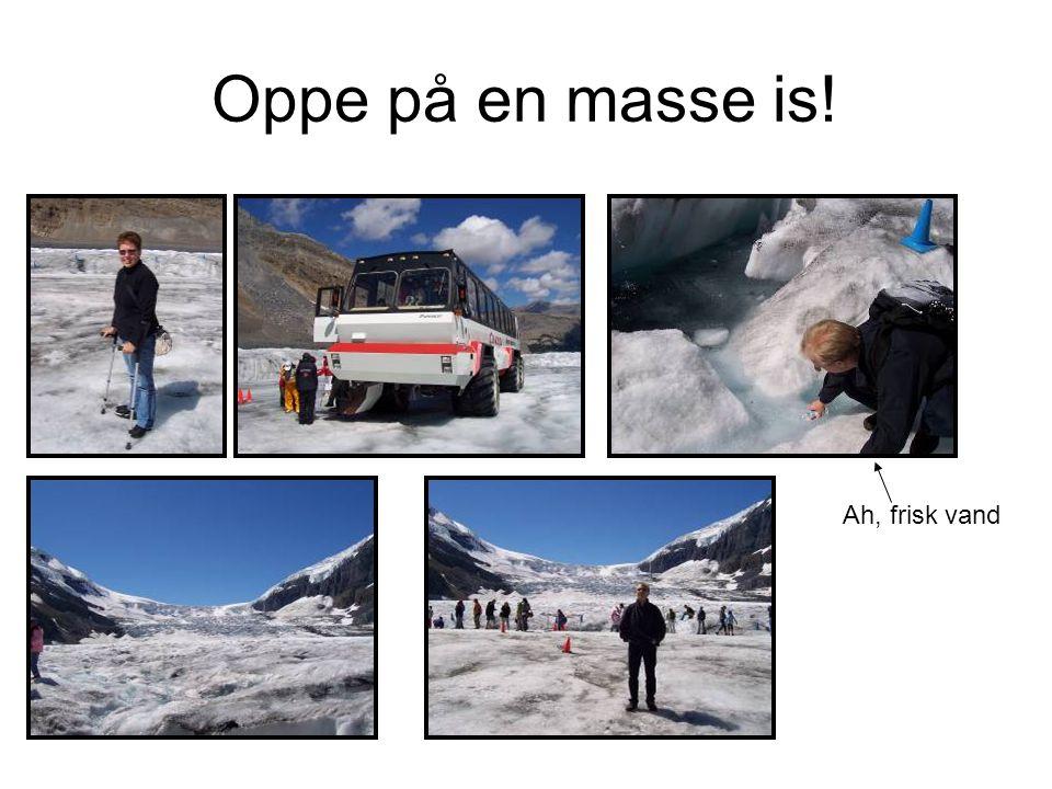 Oppe på en masse is! Ah, frisk vand