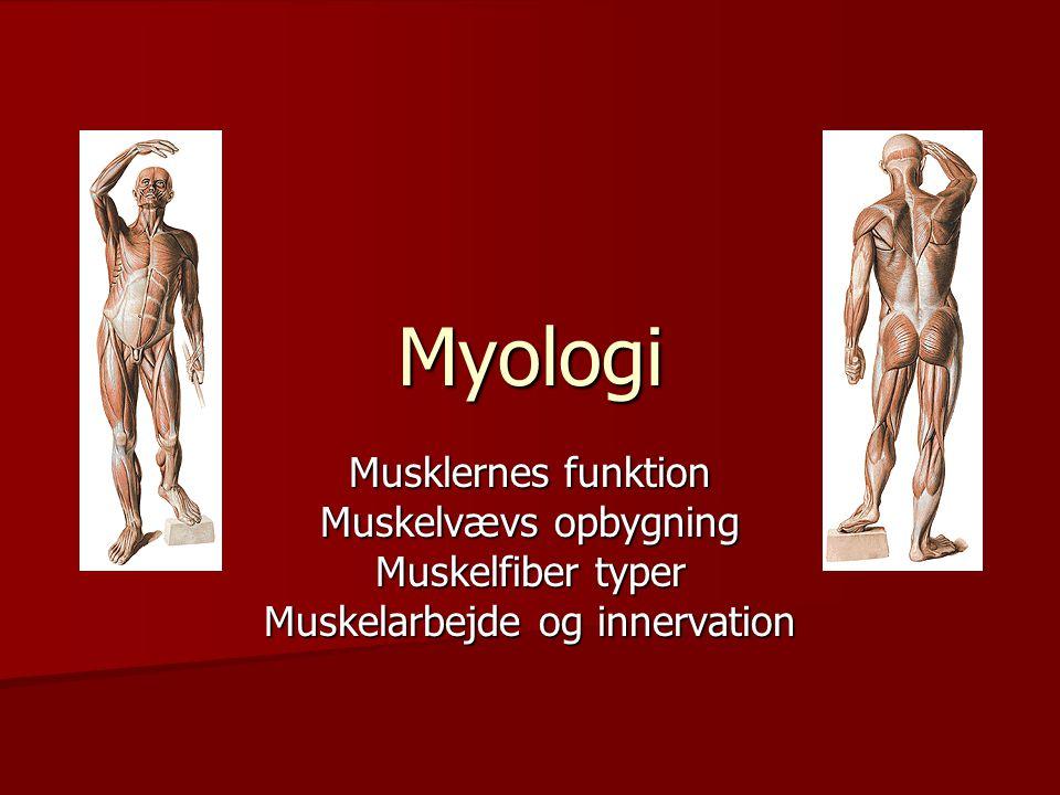 Myologi Musklernes funktion Muskelvævs opbygning Muskelfiber typer Muskelarbejde og innervation