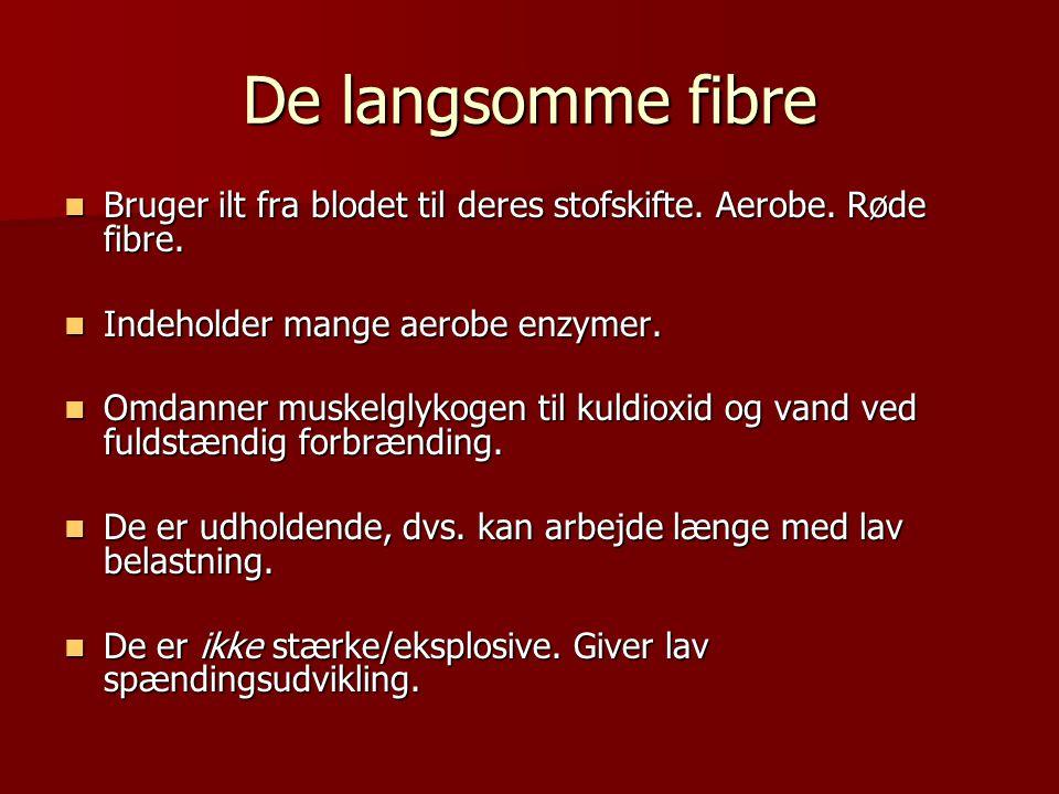 De langsomme fibre  Bruger ilt fra blodet til deres stofskifte. Aerobe. Røde fibre.  Indeholder mange aerobe enzymer.  Omdanner muskelglykogen til