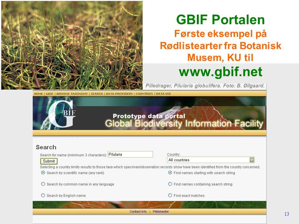 13 GBIF Portalen Første eksempel på Rødlistearter fra Botanisk Musem, KU til www.gbif.net Pilledrager, Pilularia globulifera.