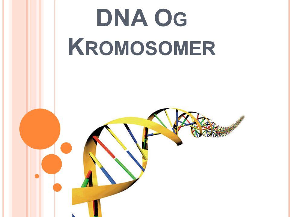 DNA O G K ROMOSOMER