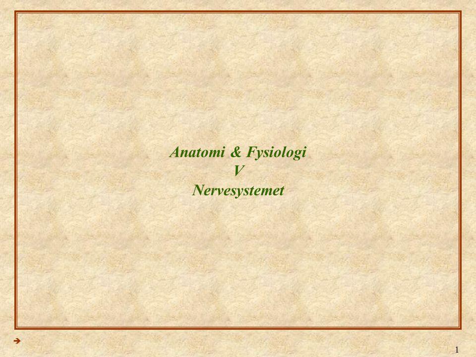 2 Anatomi & Fysiologi - Lektion 5  Nervecellen (neuronet)  Dendritter  Nervecellens krop (Cellelegement)  Axon & Axonets forgreninger  Synaptisk endeterminaler 