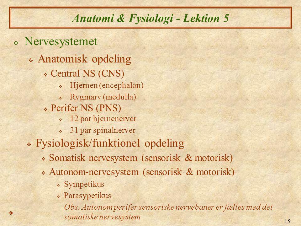 15 Anatomi & Fysiologi - Lektion 5  Nervesystemet  Anatomisk opdeling  Central NS (CNS)  Perifer NS (PNS)   12 par hjernenerver  31 par spinaln