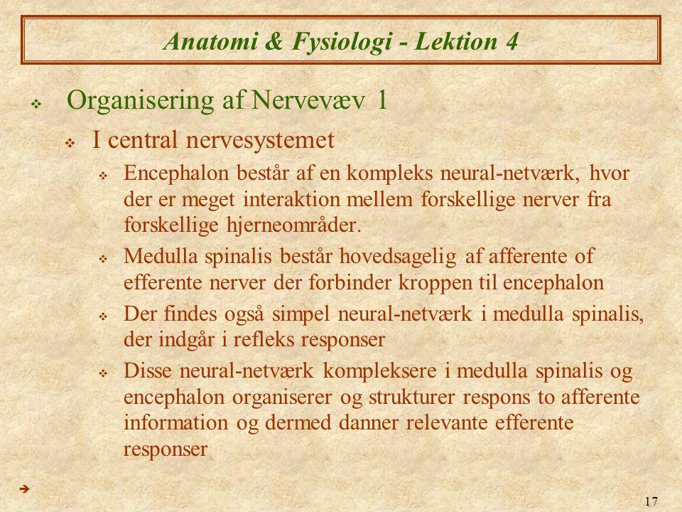 17 Anatomi & Fysiologi - Lektion 4  Organisering af Nervevæv 1  I central nervesystemet  Encephalon består af en kompleks neural-netværk, hvor der