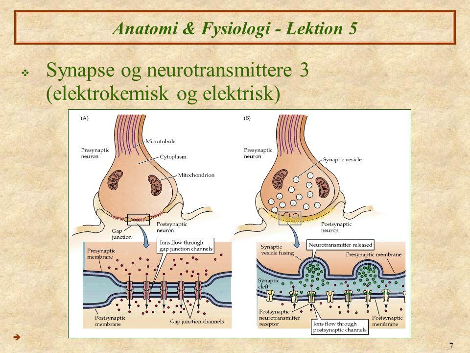 8 Anatomi & Fysiologi - Lektion 5  Synapse og neurotransmittere 4  Synapser kan være excitoriske eller inhibtoriske  Det vil sige at påvirkning på modtager neuronet kan være hæmmende, eller stimulerende.