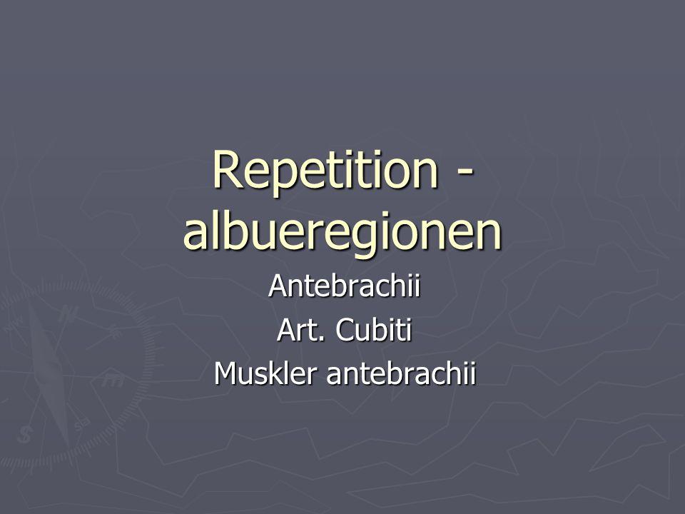 Repetition - albueregionen Antebrachii Art. Cubiti Muskler antebrachii